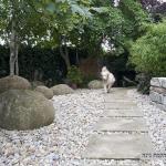 הקמת גינה עם חיפוי אבנים