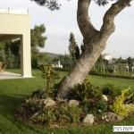 מדשאה גדולה ועץ לשבירה