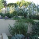 עיצוב גינה עם צמחי בר