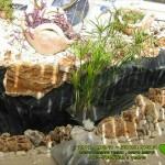 צמחי-מים-לבריכה