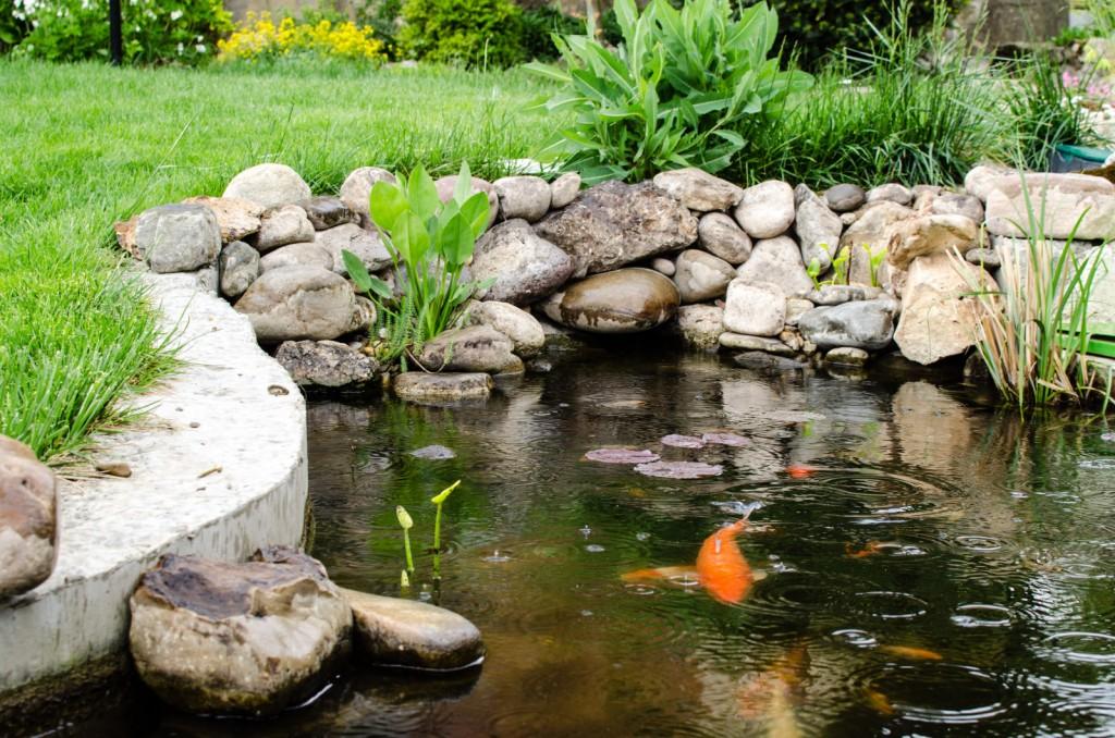 בריכת דגים- בריכות נוי לגינה